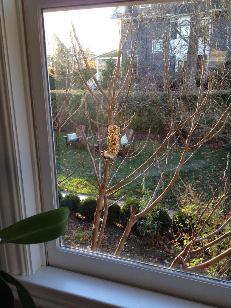I miei vicini: gli uccelli